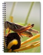 Grasshopper Antenna Down Spiral Notebook
