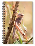 Grasshopper In The Marsh Spiral Notebook