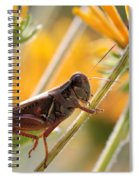 Grasshopper On Coneflower Stem Spiral Notebook
