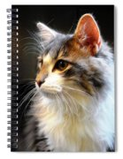 Gray And White Cat Spiral Notebook