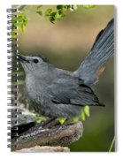 Gray Catbird Drinking Spiral Notebook