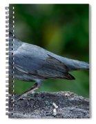 Gray Catbird Dumetella Carolinensis Spiral Notebook