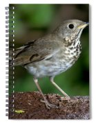 Gray-cheeked Thrush Catharus Minimus Spiral Notebook