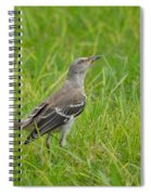 Gray-eyed Catbird II Spiral Notebook