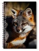 Gray Fox Spiral Notebook