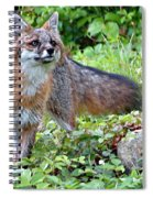 Gray Fox Spiral Notebook