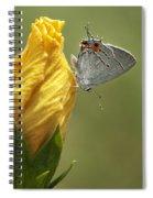 Gray Hairstreak Butterfly Spiral Notebook