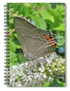 Gray Hairstreak Butterfly - Strymon Melinus Spiral Notebook
