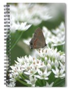 Gray Hairstreak On White Blossoms Spiral Notebook