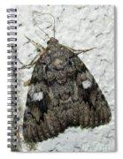 Gray Owlet Moth Spiral Notebook