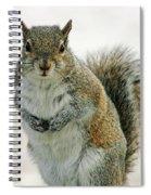 Gray Squirrel Spiral Notebook