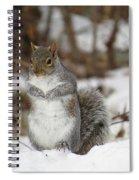 Gray Squirrel In Snow Spiral Notebook
