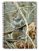 Gray Squirrel - Sciurus Carolinensis Spiral Notebook