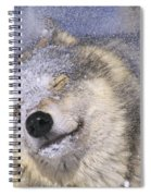 Gray Wolf Canis Lupus Shaking Snow Off Spiral Notebook
