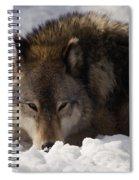 Gray Wolf In Snow Spiral Notebook