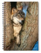 Gray Wolf In Tree Canis Lupus Spiral Notebook