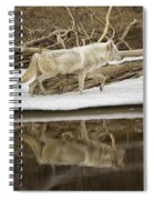 Gray Wolf Reflection Spiral Notebook