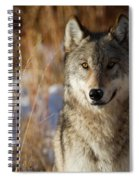 Gray Yearling Spiral Notebook