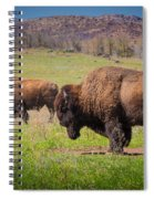 Grazing Bison Spiral Notebook