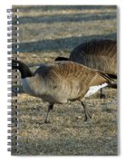 Grazing Geese Spiral Notebook