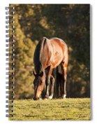 Grazing Horse At Sunset Spiral Notebook