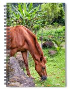 Grazing In Paradise Spiral Notebook