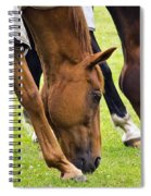 Grazing In Sync Spiral Notebook
