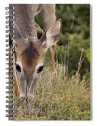Grazing Oklahoma Spiral Notebook
