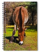 Grazing With An Attitude Spiral Notebook