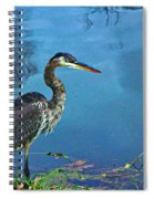 Great Blue Along The Canal Spiral Notebook
