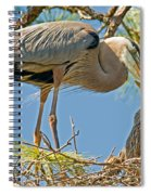 Great Blue Heron Adult Feeding Nestling Spiral Notebook