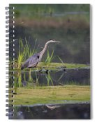 Great Blue Heron At Down East Maine Wetland Spiral Notebook