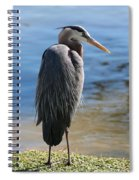 Great Blue Heron By Pond Spiral Notebook