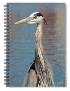 Great Blue Heron By The Water Spiral Notebook