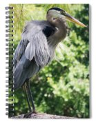 Great Blue Heron IIi Spiral Notebook