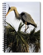 Great Blue Heron On Palm Spiral Notebook