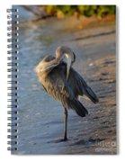 Great Blue Heron Preening On The Beach Spiral Notebook