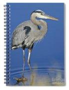 Great Blue Heron Spiral Notebook