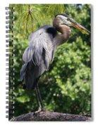 Great Blue Heron Vii Spiral Notebook