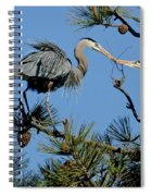 Great Blue Heron With Nest Material Spiral Notebook
