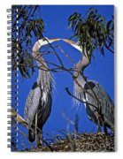 Great Blue Herons Spiral Notebook