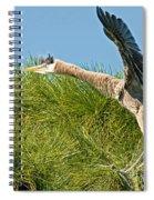 Great Blue Herons Spiral Notebook