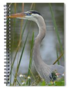 Great Blue In The Reeds Spiral Notebook