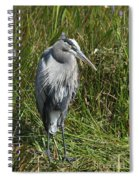 Great Blue Waiting For Prey Spiral Notebook