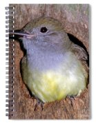 Great Crested Flycatcher In Nest Cavity Spiral Notebook