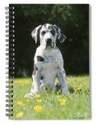 Great Dane Puppy Spiral Notebook