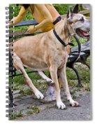 Great Dane Sitting On Park Bench Spiral Notebook