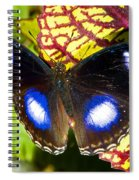 Great Eggfly Butterfly Spiral Notebook