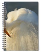Great Egret Grooming Spiral Notebook