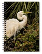 Great Egret In Breeding Plumage Spiral Notebook